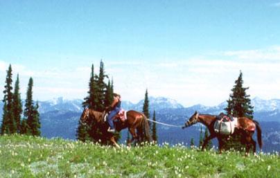 而是在縣城附近村寨租馬匹,騎馬經羊腸小道,翻窯溝山去牟尼溝旅游.