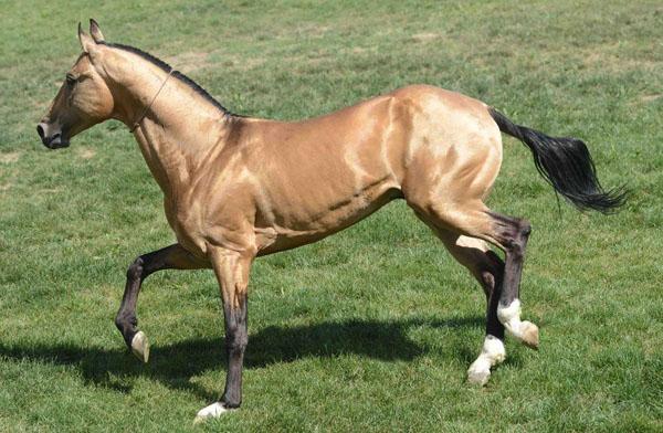 摘要: 马术耐力赛是国际马联开展的项目之一,因此耐力赛马的选择也不应该是盛装舞步或场地障碍项目淘汰下的马匹。即使在其他国家,传统观念中总有人认为耐力赛马没有其他马术项目的优良。其实事实证明高水平的耐力赛马也必 ...