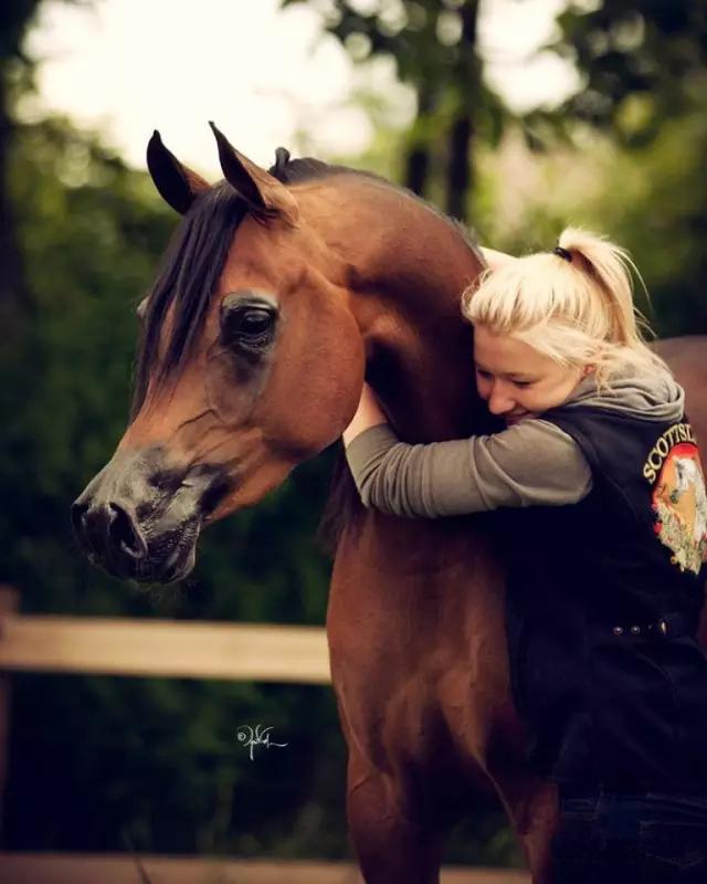 """""""世界上最美麗的阿拉伯馬馬房""""——阿聯酋阿治曼阿拉伯馬馬房圖片"""