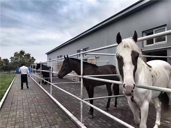 马匹.jpg