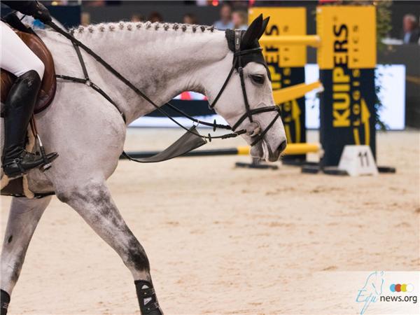 Stock-paard-springen-jump6.jpg